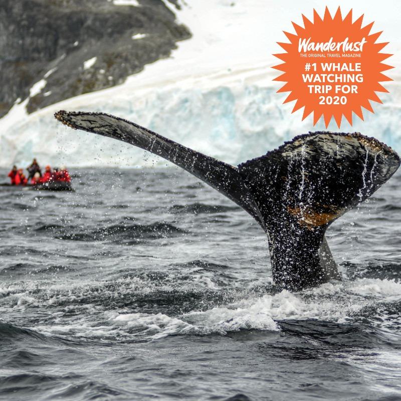 Antarctic kayakers navigating around iceberg