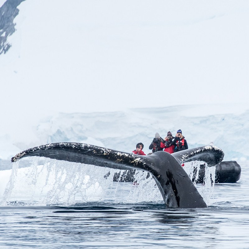whale sighting in Antarctica
